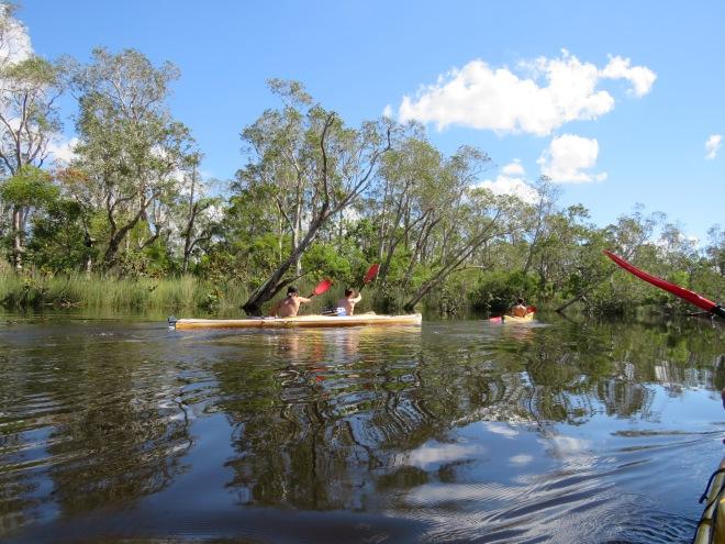 Everglades adventure in Noosa